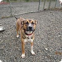 Adopt A Pet :: Wiley - Tillamook, OR