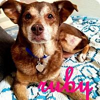 Adopt A Pet :: Ruby2 - Scottsdale, AZ