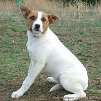 Adopt A Pet :: Biscuit*SPECIAL ADOPTION FEE - parissipany, NJ
