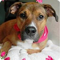 Adopt A Pet :: Layla - Adoption Pending - Tipp City, OH