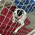 Adopt A Pet :: Fin