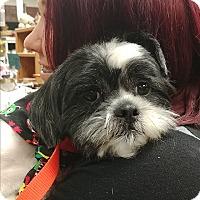 Adopt A Pet :: Hank - Ogden, UT