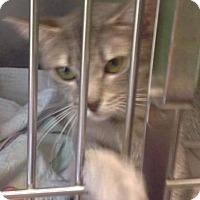 Adopt A Pet :: Marina - Freeport, NY
