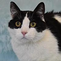 Adopt A Pet :: Patches - Eureka, CA