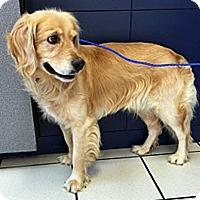 Adopt A Pet :: Wind - BIRMINGHAM, AL