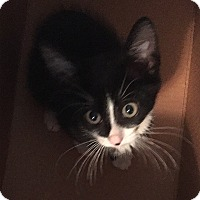 Adopt A Pet :: Fred Astaire - Tampa, FL