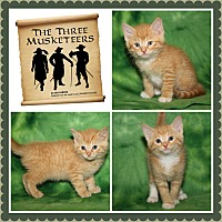 Adopt A Pet :: The Three Musketeers - Marietta, OH