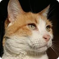 Adopt A Pet :: Orangecicle - Canoga Park, CA