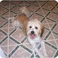 Adopt A Pet :: Sammy - Dayton, OH