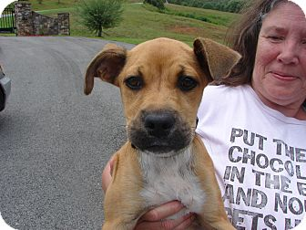 Boxer Mix Puppy for adoption in Evensville, Tennessee - Betsy Ross