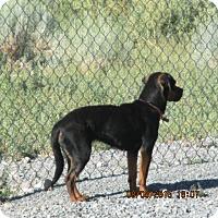 Adopt A Pet :: Samantha - Beaver, UT