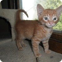 Adopt A Pet :: Mosi - Milwaukee, WI