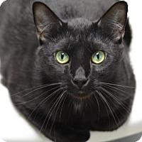 Adopt A Pet :: Shadow160233 - Atlanta, GA