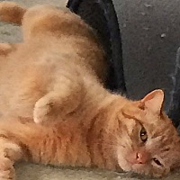 Adopt A Pet :: Cooper - Durham, NC