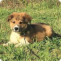Adopt A Pet :: Tiana pending adoption - Manchester, CT