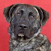 Adopt A Pet :: Hercules - Renfrew, PA