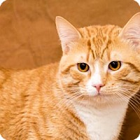 Adopt A Pet :: Lucas - Chesapeake, VA