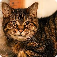 Adopt A Pet :: Lucas - $10 - Brimfield, MA