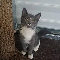 Adopt A Pet :: Emily - Mims, FL