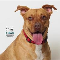 Adopt A Pet :: Cindy - Belle Chasse, LA