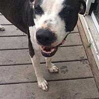 Adopt A Pet :: Luna - Tuskegee, AL