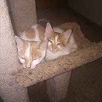 Adopt A Pet :: Mellon - wayne, MI