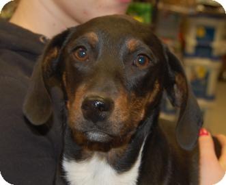 Terrier (Unknown Type, Medium) Mix Puppy for adoption in Brooklyn, New York - Star