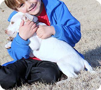 Labrador Retriever Mix Puppy for adoption in Pewaukee, Wisconsin - Tulip