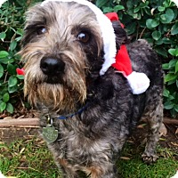 Adopt A Pet :: SPANKY - Irvine, CA