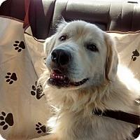 Adopt A Pet :: Potter - Knoxvillle, TN