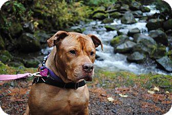 Pit Bull Terrier/Dogue de Bordeaux Mix Dog for adoption in Portland, Oregon - Iris (foster)