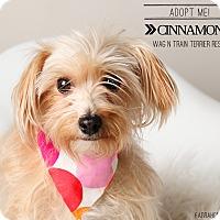 Adopt A Pet :: Cinammon-Pending Adoption - Omaha, NE