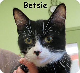 Domestic Shorthair Kitten for adoption in Warren, Pennsylvania - Betsie