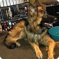 Adopt A Pet :: MOUSE (Courtesy List) - San Pedro, CA