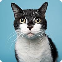 Adopt A Pet :: Malbec - Wilmington, DE