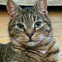 Adopt A Pet :: Springfield - Queens, NY