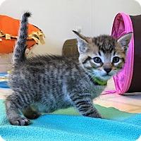 Adopt A Pet :: Cinnamon - Burgaw, NC