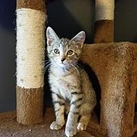 Adopt A Pet :: Fae - Wichita, KS