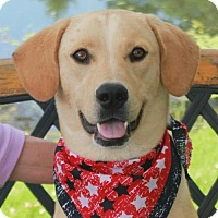 Adopt A Pet :: Violet-PENDING - Garfield Heights, OH