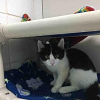 Adopt A Pet :: EVE - Canfield, OH