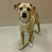 Adopt A Pet :: DYLLAN - Reno, NV