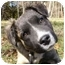 Photo 1 - Shepherd (Unknown Type)/Retriever (Unknown Type) Mix Dog for adoption in Mocksville, North Carolina - Toby