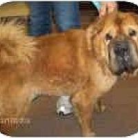 Adopt A Pet :: Barkley - Bethesda, MD