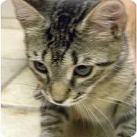 Adopt A Pet :: Mika - Naples, FL