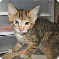 Adopt A Pet :: Ailsa - Shelton, WA
