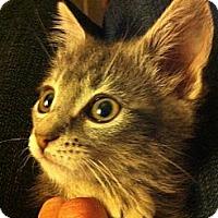 Adopt A Pet :: sticky - Santa Monica, CA