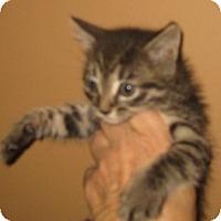 Adopt A Pet :: Pixel - Dallas, TX