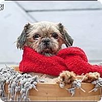 Adopt A Pet :: Cappi - Hilliard, OH