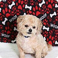 Adopt A Pet :: Brett - Troy, MI