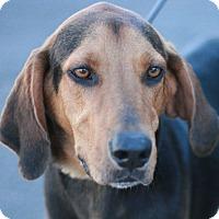 Adopt A Pet :: George - Canoga Park, CA